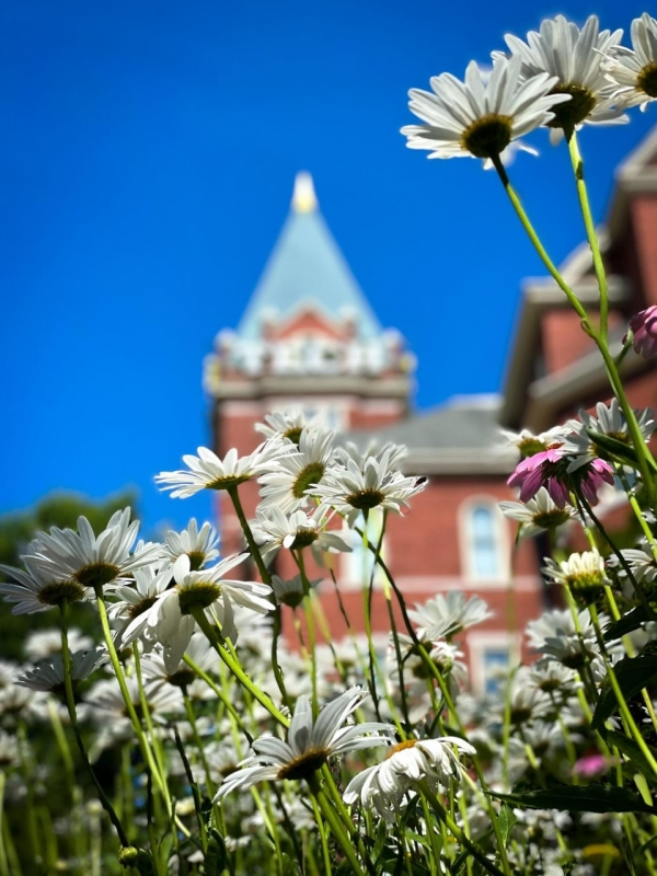 tech tower with daisies in foreground