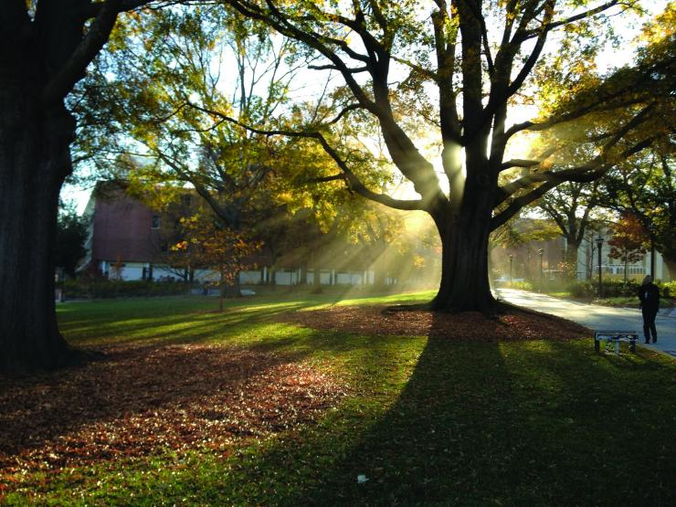 tree darklight